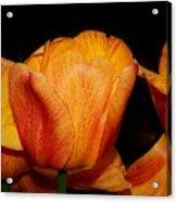 Tulips On A Black Background Acrylic Print