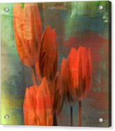 Tulips With Green Background Acrylic Print