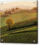 Tuscan Vinyards Acrylic Print