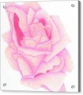 Twinkle Pink Acrylic Print