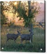 Two Deer Sunset Acrylic Print