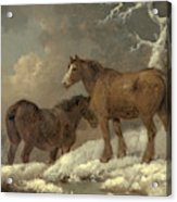 Two Horses In The Snow Acrylic Print