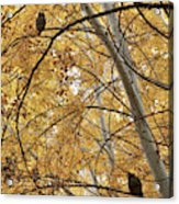 Two Owls In Autumn Tree Acrylic Print