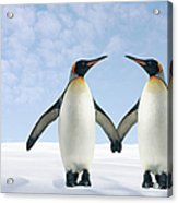 Two Penguins Holding Hands Acrylic Print