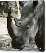 Up Close Look At The Face Of A Rhinoceros Acrylic Print