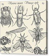 Vector Set Insects In Vintage Style Acrylic Print