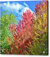 Vibrant Autumn Hues At Cornell University - Ithaca, New York Acrylic Print