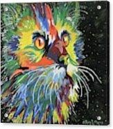 Vibrant Cat Acrylic Print