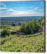 Vines Acrylic Print