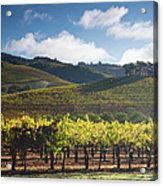 Vineyards Autumn Time In Sonoma Valley Acrylic Print