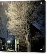 If Trees Could Talk Acrylic Print