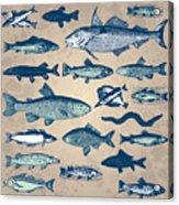 Vintage Fish Drawings Set, Vector Acrylic Print