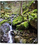 Vivid Green In The Black Forest Acrylic Print