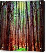 Waihou Forest  - Maui Acrylic Print