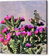 Walking Stick Cactus And Wren Acrylic Print