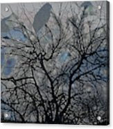 Wasteway Willow 04 Acrylic Print