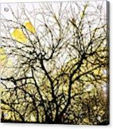 Wasteway Willow 18 Acrylic Print