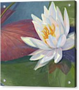 Water Beauty Acrylic Print