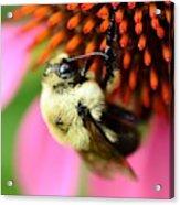 Water Drop On Bee Eye Acrylic Print