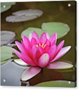 Water Lilly, Jemez Springs NM Acrylic Print