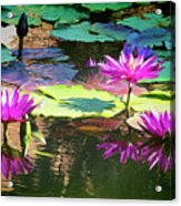 Water Lily 6 Acrylic Print