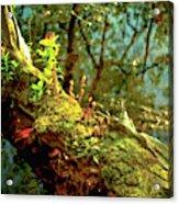 Water Log Acrylic Print