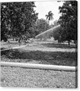 Water Spray Orchard Acrylic Print