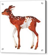 Watercolor Dotted Fawn Painting. Hand Acrylic Print