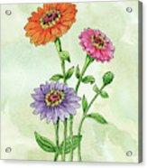 Watercolor Orange Pink Purple Zinnia Flowers Acrylic Print