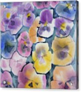 Watercolor - Pansy Design Acrylic Print