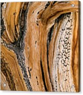 Weathered Wood Of Ancient Bristlecone Acrylic Print