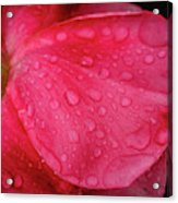 Wet Rose Petal Acrylic Print