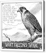 What Falcons Think Acrylic Print