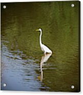 White Egret In Water Acrylic Print