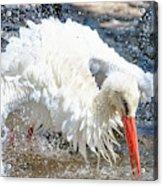 White Stork Fishing Acrylic Print