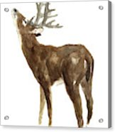 White Tailed Deer Stag With Head Tilted Upwards Acrylic Print
