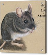 Wild Deer Mouse Acrylic Print
