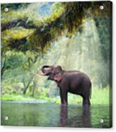 Wild Elephant In The Beautiful Forest Acrylic Print