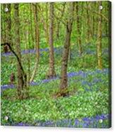 Wild Garlic And Bluebells Acrylic Print