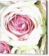 Wild Pink Roses Acrylic Print