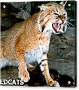 Wildcats Mascot 3 Acrylic Print