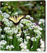 Wildflower Butterfly Acrylic Print