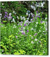 Wildflowers On Green's Hills Acrylic Print