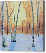 Winter Birches-cardinal Left Acrylic Print