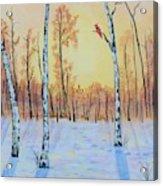 Winter Birches-cardinal Right Acrylic Print
