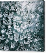 Winter Forest - Aerial Photography Acrylic Print