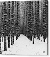 Winter Forest In Black And White Acrylic Print