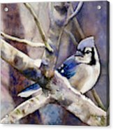 Winter Jay Acrylic Print