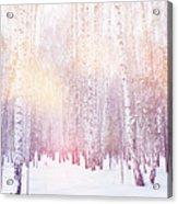 Winter Magic Birch Grove Acrylic Print