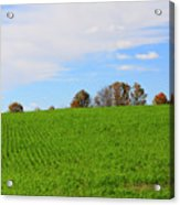 Winter Wheat In October In Southern Ontario Acrylic Print